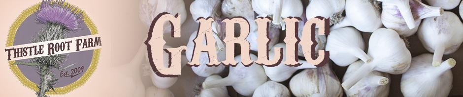Thistle Root Farm Fresh Garlic